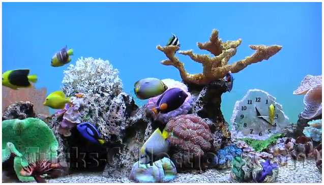 Pics Photos - And Realistic Marine Aquarium Screensaver V3 0 Is One Of ...